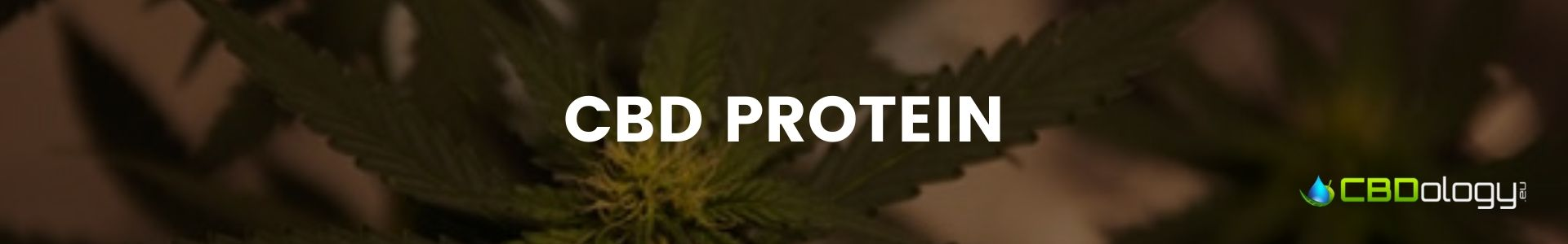 CBD Protein