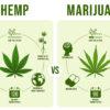 Difference between hemp and marijuana infogrpahic