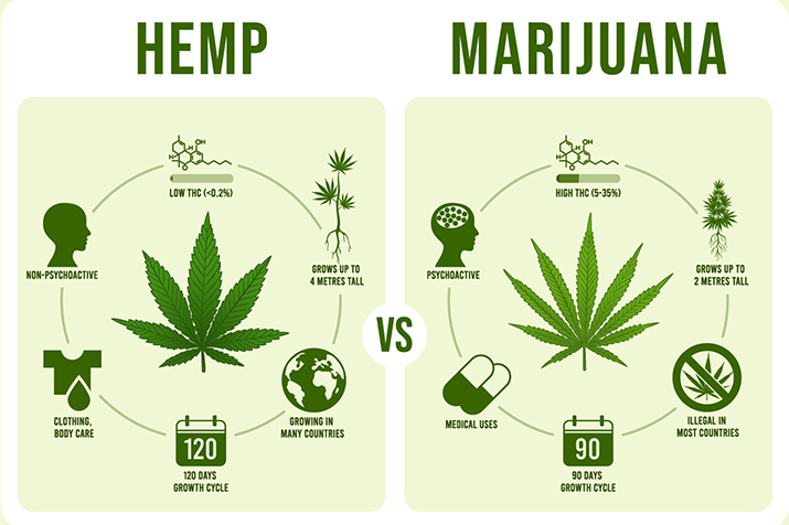 Difference between hemp and marijuana infogrpahic